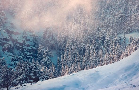 Amazing winter landscape - Stock Photo - Images