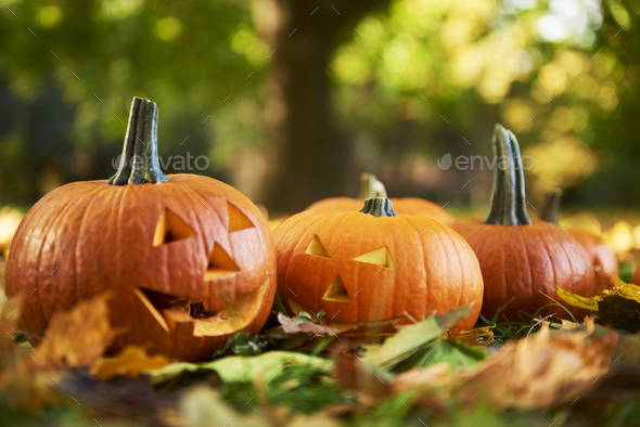 Close up of  halloween pumpkins in autumn forest - Stock Photo - Images