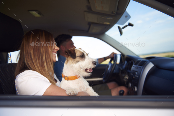 Side view of young couple and dog traveling by car - Stock Photo - Images
