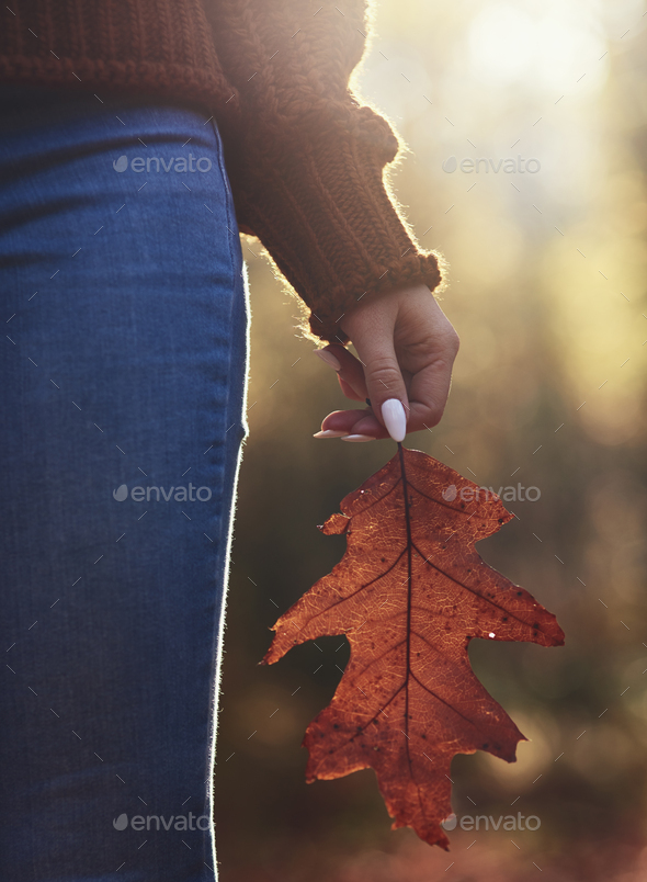 Close up of woman's hand holding big autumnal leaf - Stock Photo - Images
