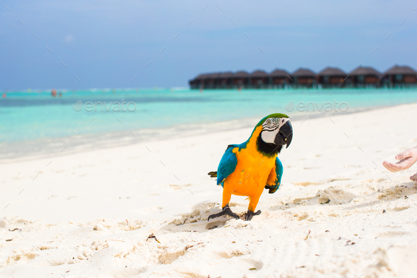 Wild colorful bright parrot on white sand at tropical island in the Indian Ocean - Stock Photo - Images