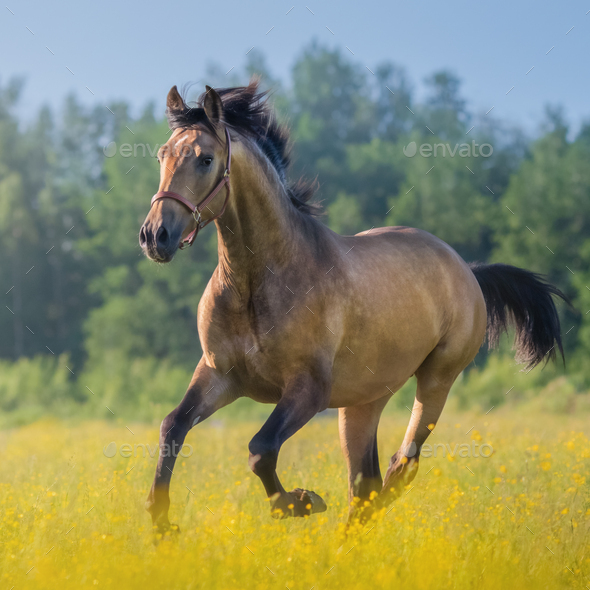 Andalusian horse in field of flowers on farm. - Stock Photo - Images