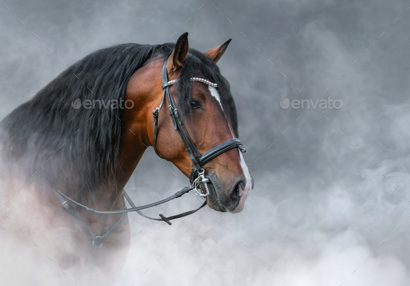 Spanish bay horse with long mane in light smoke. - Stock Photo - Images