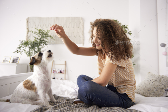 Beautiful woman playing with dog on the bed - Stock Photo - Images