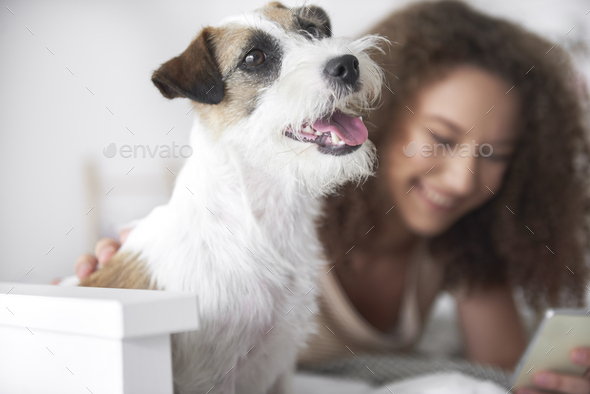 Shot of happy dog at home - Stock Photo - Images