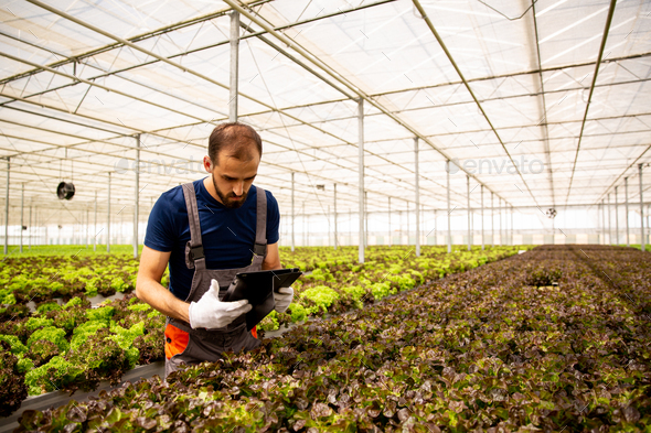 Worker in greenhouse with tablet in hand following something on screen - Stock Photo - Images