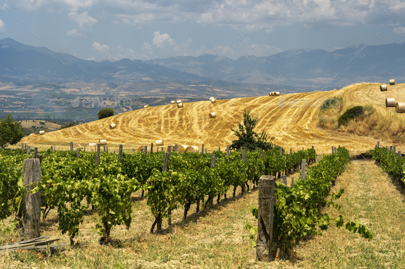 Summer landscape in Calabria, Italy, near Spezzano Albanese - Stock Photo - Images