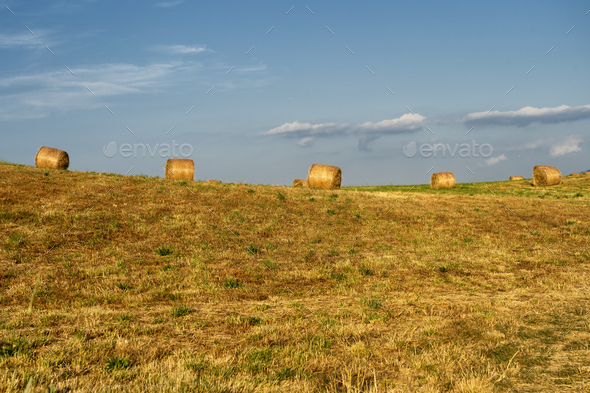 Summer landscape along the road to Camigliatello, Sila - Stock Photo - Images