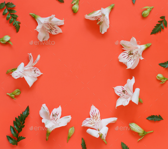 Flowers on a red background - Stock Photo - Images