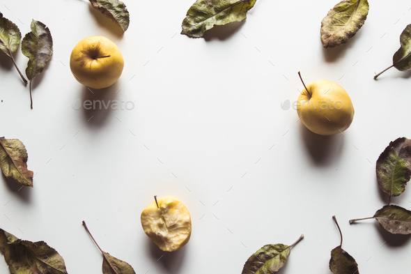 Yellow apples on a white background with old leaves, wholesome food, farming, vegetarian - Stock Photo - Images