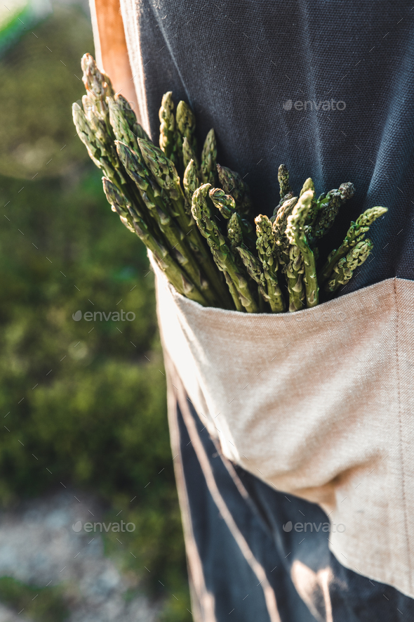 Green asparagus kept in men's hands - Stock Photo - Images