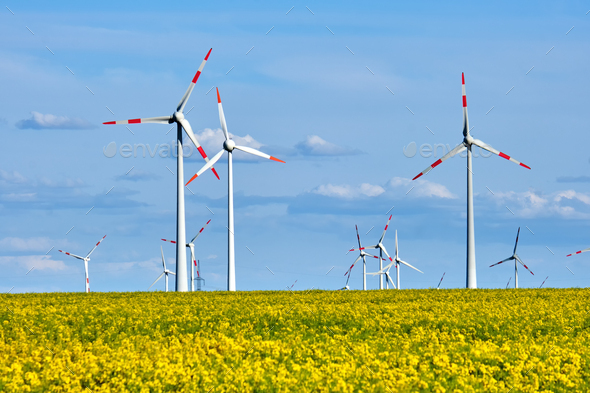 Wind turbines and a flowering canola field - Stock Photo - Images