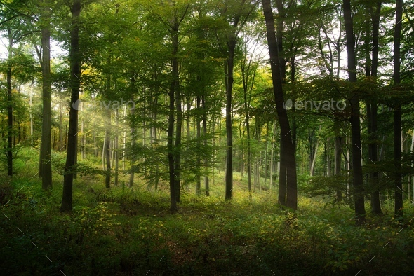 Forest - Stock Photo - Images