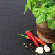 Fresh spices and herbs - PhotoDune Item for Sale