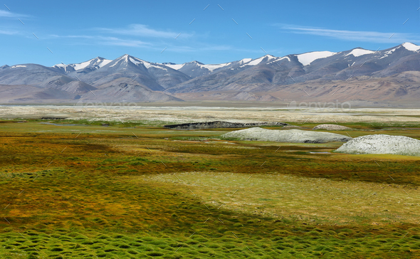Landscape view of Tso Kar salty lake with wild ass at foreground in Ladakh, India - Stock Photo - Images