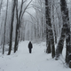 Man on winter path in the woods with snow - PhotoDune Item for Sale