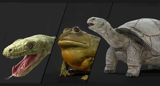 Animals Reptile