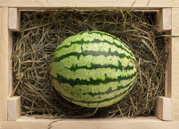 Organic and fresh watermelon on hay inside eco wooden box - Stock Photo - Images