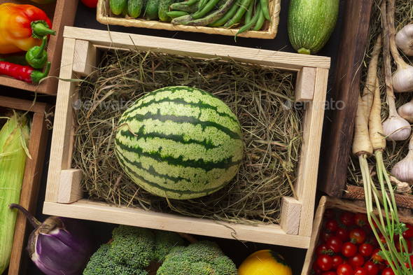 Big organic watermelon in wooden box on counter - Stock Photo - Images