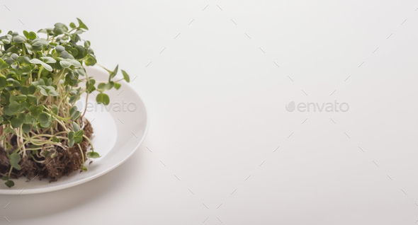 Sprouted seeds with soil on plate over white background - Stock Photo - Images