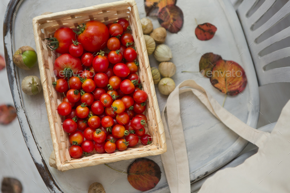 Organic tomatoes on chair with fallen leaves - Stock Photo - Images