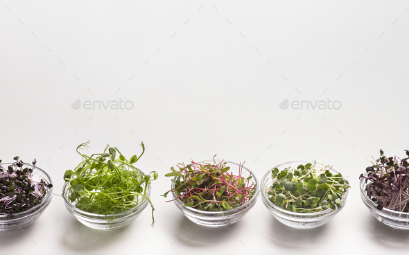 Collection of sprouted microgreens in small glass plates on white - Stock Photo - Images