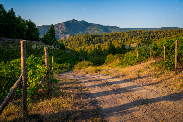 Green trees and turn the road to the mountains in Greece - Stock Photo - Images