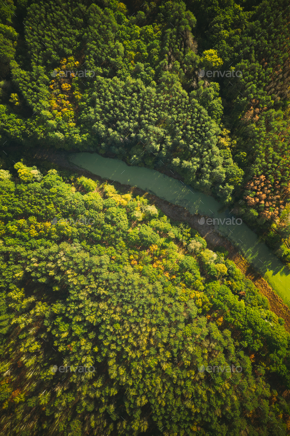 Aerial View Green Forest Woods And River Marsh Bog In Summer Landscape. - Stock Photo - Images