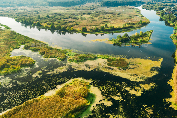 Aerial View Green Marsh And River Landscape In Summer Day. - Stock Photo - Images