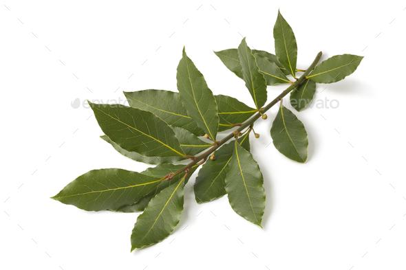 Twig of fresh bay leaf - Stock Photo - Images