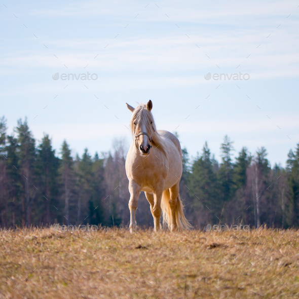 beautiful horse in a field - Stock Photo - Images