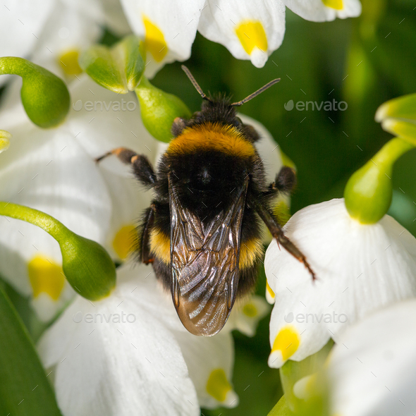 Close up Bumble bee sleeping on a flower - Stock Photo - Images