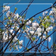 Blossoming Tree On The Wind - VideoHive Item for Sale