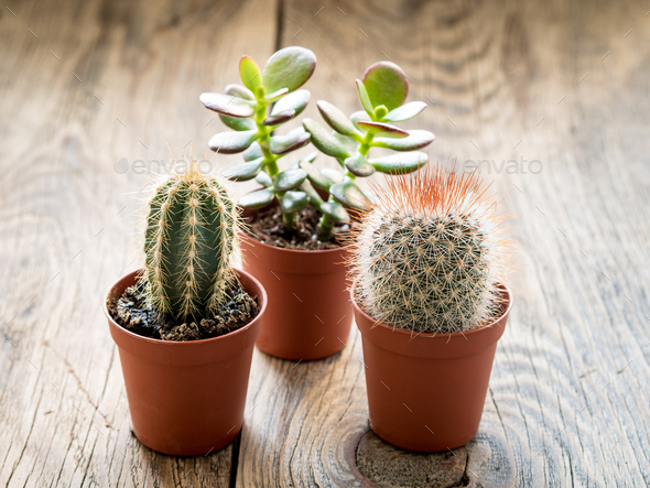 tropical house plants, cacti and succulents - Stock Photo - Images