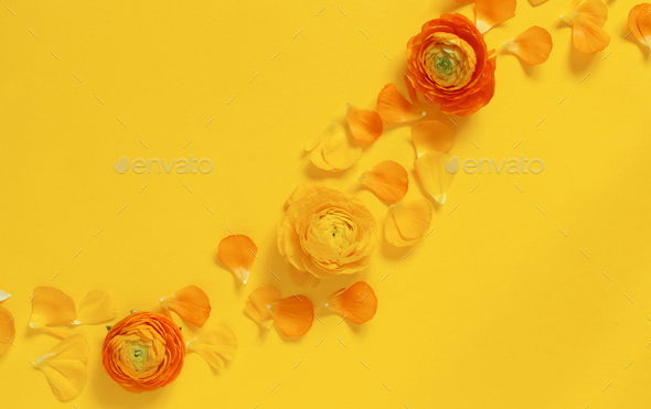 Yellow flowers and petals on a yellow background - Stock Photo - Images