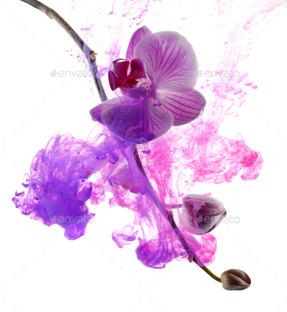 Abstract pink orchid - Stock Photo - Images