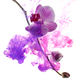 Abstract pink orchid - PhotoDune Item for Sale