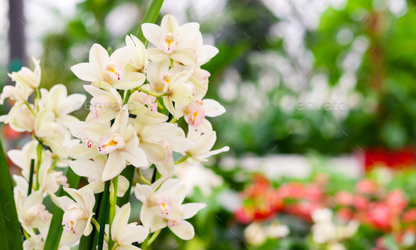 Beautiful blooming tropical orchid in store. Space for text. - Stock Photo - Images
