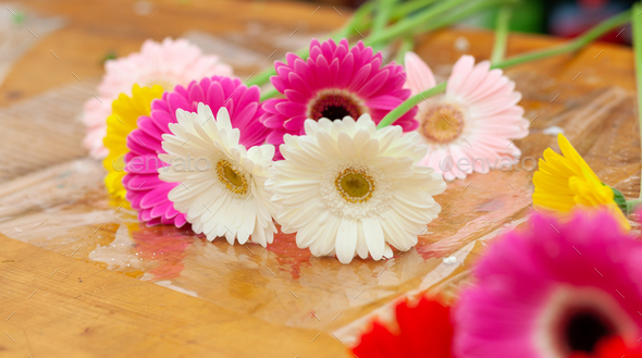 Colorful Gerbera Daisy flowers lying on a counter of a nursery - Stock Photo - Images