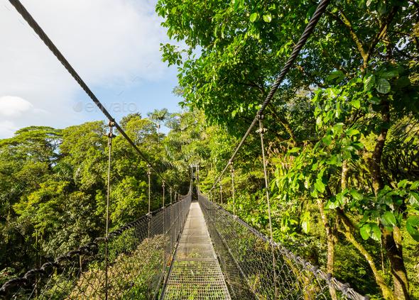 Bridge in Costa Rica - Stock Photo - Images