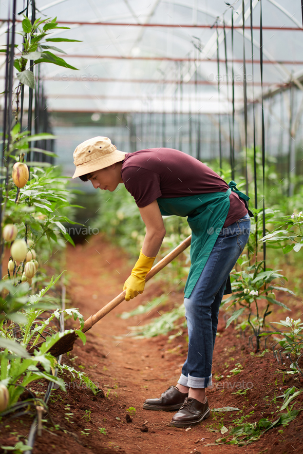 Digging greenhouse worker - Stock Photo - Images