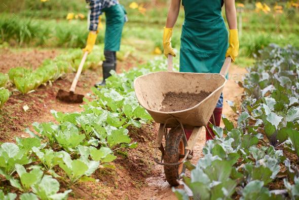 Working on plantation - Stock Photo - Images