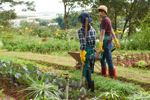 Gardening couple - Stock Photo - Images