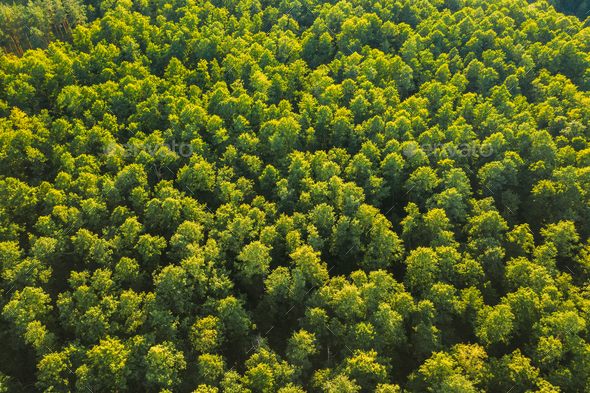 Aerial View Of Green Forest Landscape. Top View From High Attitude In Summer Evening. Natural - Stock Photo - Images