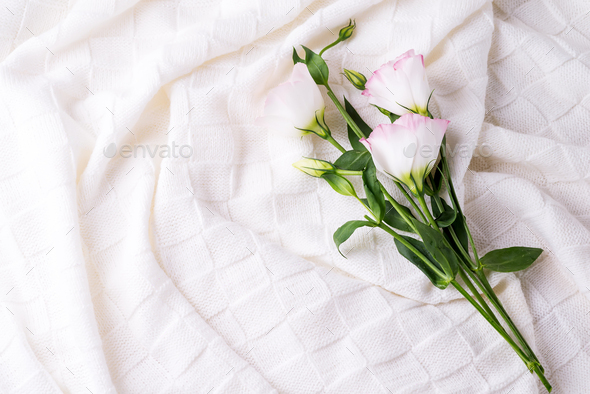 Flowers eustoma on white blanket background, flat lay copy space. Holiday concept - Stock Photo - Images