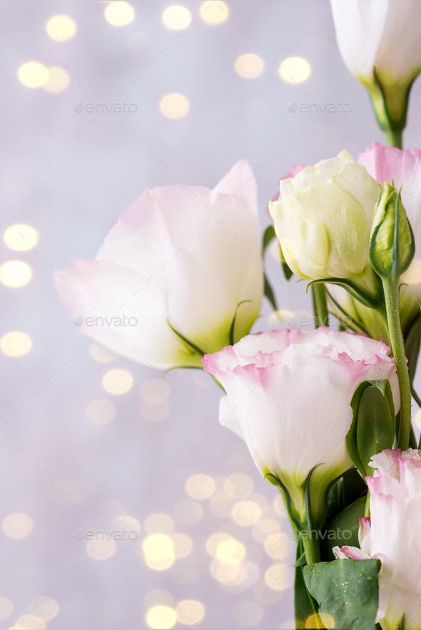 Eustoma flowers near bokeh on light background. Blank for postcards - Stock Photo - Images