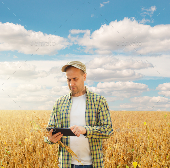 Caucasian middle age farmer uses tablet computer for inspecting soy at field - Stock Photo - Images