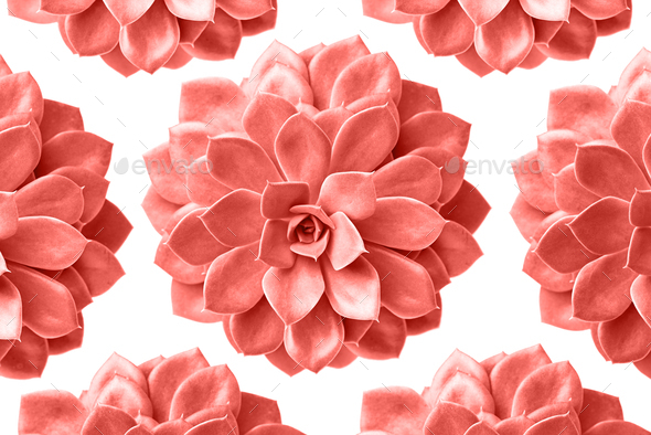 Pattern of succulent plant in living coral colour isolated on white - Stock Photo - Images