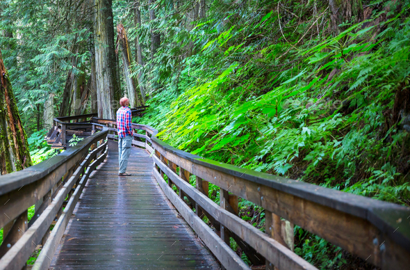 Boardwalk in the forest - Stock Photo - Images
