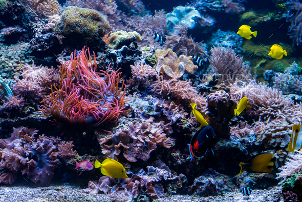 fish and marine life - Stock Photo - Images